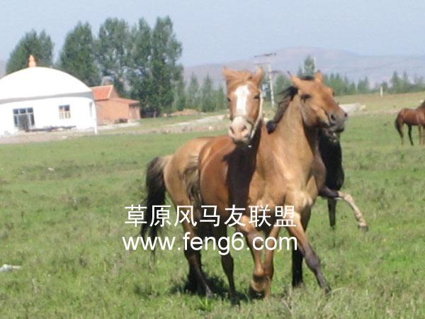 微信可爱动物头像马
