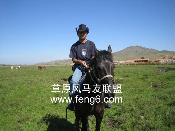 壁纸 草原 动物 马 骑马 桌面 600_450